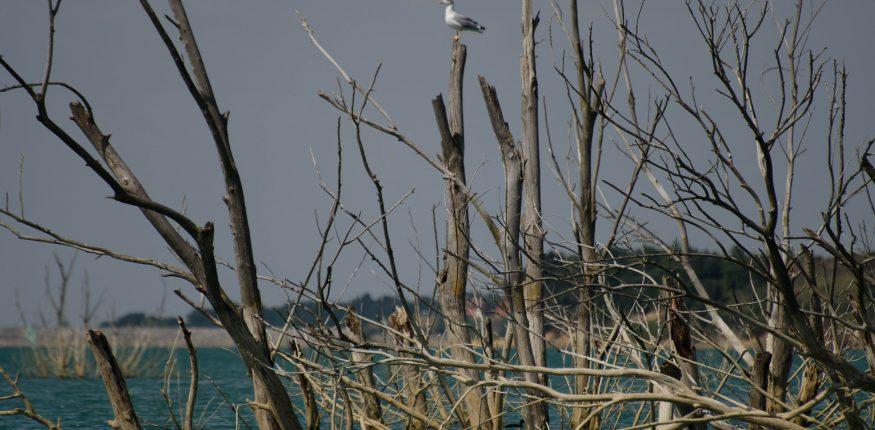 einzelne Möve sitz auf einem Baum der im Wasser steht