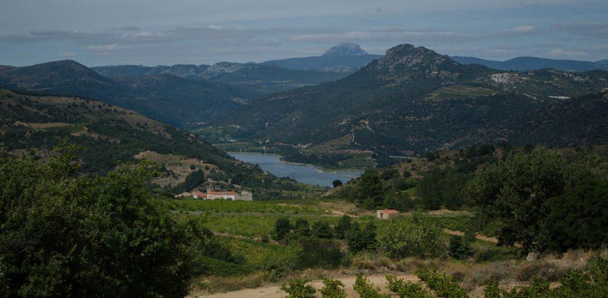 Weinfeld im Vordergrund im Hintergrund die Berge und ein französischer Stausee