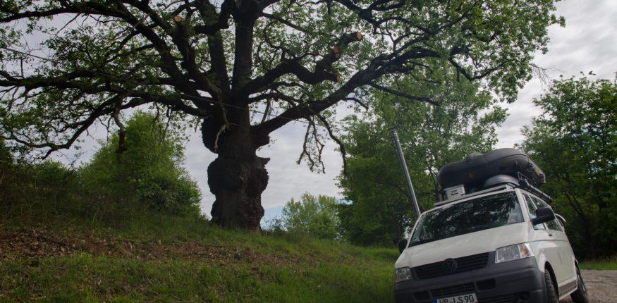schöner Baum