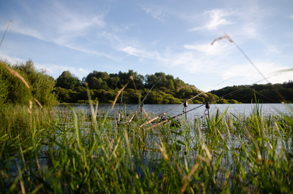 Karpfenangeln an großen Seen