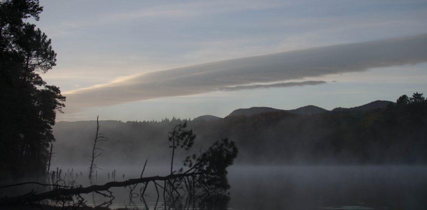 üerhängender Baum in einem See