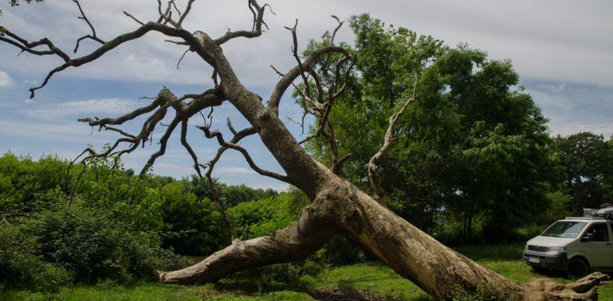 Großer Baum in Frankreich